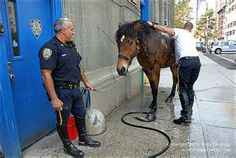 Two New York City police officers give a horse from the Mounted Unit a bath on this street in Tribeca,