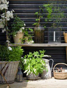 Tine Kjeldsens summer house in North Zealand - Floral Garden Ideas Small Gardens, Outdoor Gardens, Outdoor Rooms, Outdoor Living, Scandinavian Garden, Scandi Garden, Outdoor Wedding Decorations, Fruit Garden, Nordic Design