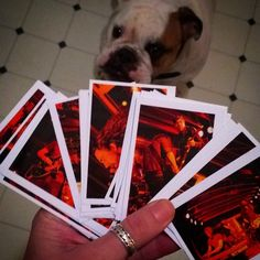 Feb 2015: Sometimes I print out photos when I am working on making selections before delivering a set. Sometimes bulldogs who want cookies help! #creativeprocess #photography #livemusic #concert #bulldog