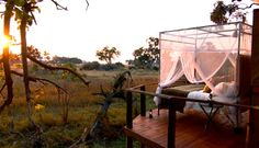 Safari adventure