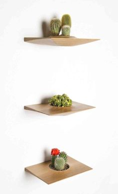 Great idea for displaying your air plants. Wall shelves!  Modern Home Decorating Ideas Of Plant Po - http://ideasforho.me/modern-home-decorating-ideas-of-plant-po/ -