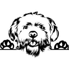 PNG Vector Cricut Cut Cutting - Another! Poodle, Dog Outline, Malteser, Dog Silhouette, Maltese Dogs, Smiling Dogs, Animal Logo, Dog Quotes, Pyrography