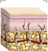 What exactly is subcutaneous tissue? Visit HowStuffWorks to learn all about subcutaneous tissue. Anti Aging Hand Cream, Best Anti Aging, Egyptian Makeup, Cellulite Oil, Subcutaneous Tissue, Holistic Nutrition, Natural Supplements, Doterra, Hollywood Stars