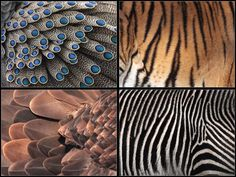 Patterns Fur And Feathers by *cycoze on deviantART