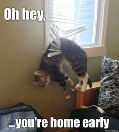 What happens when you come home early? #surprise #cats