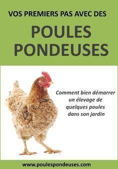 Alimentation pour vos poules: Comment bien nourriture vos poules pour obtenir de beaux oeufs?   Guide gratuit pour élever ses poules dans son jardin