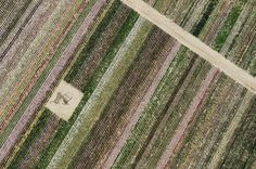 Field of flowers in Rushall - Norfolk aerial | by John D F