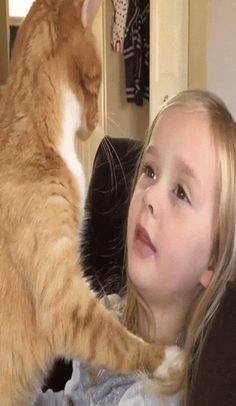 @animalonplanet We Are Best Friends, Cat Gif, Good Things, Cats, Animals, Gatos, Animales, Animaux, Animal