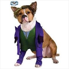 Batman Dark Knight Joker Pet Costume - Now your dog can be the villain in this super cool outfit! Batman Dark Knight The Joker Pet Costume includes purple jacket with faux . Cute Dog Costumes, Family Halloween Costumes, Dog Halloween, Halloween Snacks, Halloween Cupcakes, Vintage Halloween, Knight Halloween, Halloween Items, Halloween 2015