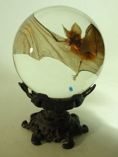 Like a cross between a specimen jar and a crystal ball. creepy but cool, assuming the specimen was obtained without killing the bat [like if it died from natural causes] Curiosity Cabinet, Goth Home, Cabinet Of Curiosities, Gothic House, Gothic Room, Decoration Design, Home And Deco, Crystal Ball, Or Antique