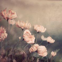 Pale Peach Pink Diorama Botanical Wall Art Flower Fine Art Photography Floral 5x5 Print Home Decor