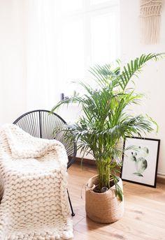 Die 52 besten Bilder von Schlafzimmer pflanzen | Bedroom plants ...