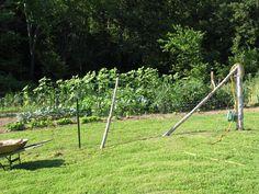 Our first garden...