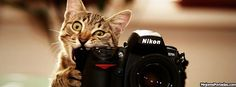 Professional pet photography: 40 wonderful and cute pictures of photogenic cats I Love Cats, Cute Cats, Funny Cats, Funny Animals, Cute Animals, Funny Humour, Animals Images, Wild Animals, Funny Cat Videos