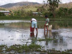 En Nicaragua el 80% de la población vive con menos de 2 dólares estadounidenses al día. En el país hay 290.000 hogares que viven de los granos básicos mayoritariamente regados por agua de lluvia. Estos pequeños productores apenas producen para alimentarse ellos y son muy vulnerables a los efectos del cambio climático. Acción contra el Hambre trabaja, entre otras cosas, en la rehabilitación de sistemas de agua potable para consumo humano para hacer frente a sequías y cambio climático.