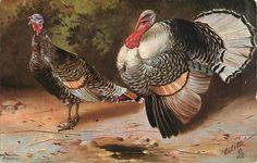 """""""Prized turkeys,"""" postcard c. 1912. Thanksgiving Blessings, Thanksgiving Greetings, Thanksgiving Traditions, Thanksgiving Turkey, Thanksgiving Projects, Vintage Thanksgiving, Happy Turkey Day, Vintage Postcards, Vintage Images"""