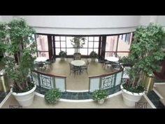 Office Plants - Interior Plant Service - Buffalo & Rochester