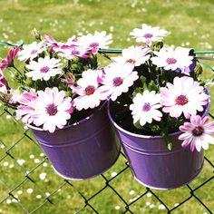 "say it with flowers...""good morning"".... #dreiraumhaus #goodmorning  #ineedcoffee"