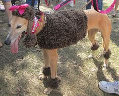 Perfectly Amusing: GREAT Greyhound Picnic Sunday 10/31/2010
