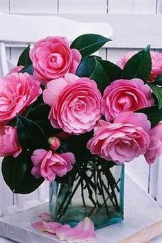 New flowers arrangements simple vase pink peonies Ideas Camelia Rosa, Rosa Rose, My Flower, Pink Flowers, Beautiful Flowers, Simple Flowers, Fresh Flowers, Flower Arrangements Simple, Colorful Roses