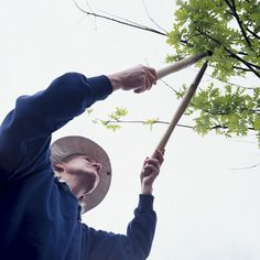 Farmers Almanac: Learn how to trim, reduce, and amputate extraneous tree and shrub limbs. The Old Farmer's Almanac presents pruning pointers for late winter and early spring. Pruning Shrubs, Tree Pruning, Mock Orange Bush, Green Velvet Boxwood, Tree Trimming Service, Myrtle Tree, Old Farmers Almanac, Landscaping Trees, Autumn Garden