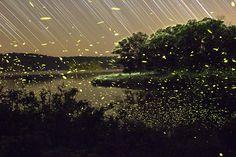 La belleza convertida en luciérnagas capturadas con larga exposición   http://caracteres.mx/la-belleza-convertida-en-luciernagas-capturadas-con-larga-exposicion/