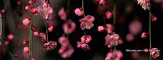 Flowers Pink Spring Facebook Cover Photos