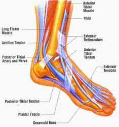keeping your muscles is important for your foot health