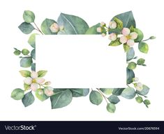 Watercolor vector green floral card with eucalyptus leaves, Jasmine flowers and branches isolated on white background. Illustration for cards, wedding invitation, save the date or greeting design. Wedding Cards, Wedding Invitations, Eucalyptus Leaves, Frame Wreath, Floral Border, Flower Backgrounds, Floral Illustrations, Border Design, Vintage Flowers