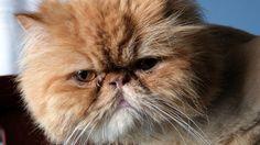 Garfield by Juan Antonio  on 500px