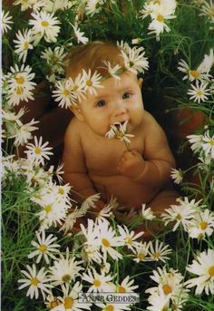 anne geddes photography - Google Search
