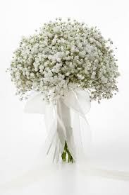 gypsophilia - Google Search