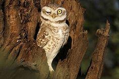 A natureza está repleta de espécies bizarras; veja - Fotos - Meio Ambiente