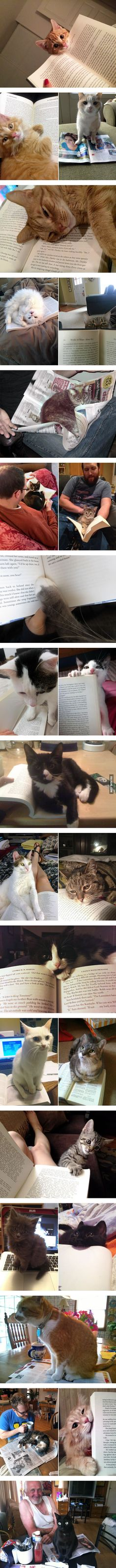 뭐 좀 읽으려고 하면