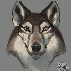 #wolf #aaronblaise #anatomy #wolfanatomy A A Ron, Animal Anatomy, Fantasy Art, Husky, Wolf, Creatures, Nature, Animals, Naturaleza