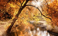 Creek, Autumn Ultra HD Desktop Background Wallpaper for UHD TV : Multi Display, Dual Monitor : Tablet : Smartphone Autumn Phone Wallpaper, Music For Studying, Music Backgrounds, Autumn Nature, Autumn Fall, Autumn Leaves, Facebook Timeline Covers, Timeline Photos, Widescreen Wallpaper