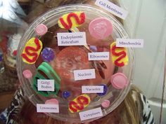 A Series of 3rd Grade Events: Animal Cell Model