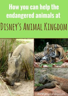 Endangered animals at Disney's Animal Kingdom - Disney in your Day