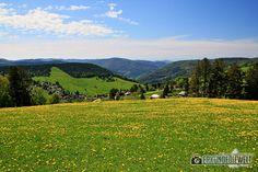 16DEU0113-schwarzwald-wanderung-martin-heidegger-rundweg