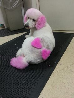 -Repinned-Hearts Dog Grooming Shop, Poodle Grooming, Creative Grooming, Pink Dog, Dog Design, Dog Art, Dog Life, Cute Dogs, Cute Pictures