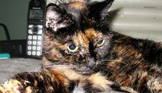 She is older than Windows 3.0, the oldest Windows version most people can recall. So, just how old is Tiffany Two, the Guinness World Records' old cat?