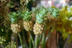 Sprout Home: Botanical Rarities