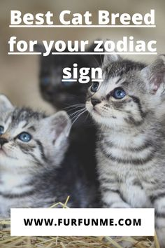 Funny Cat Memes, Funny Cats, Best Cat Breeds, Cat Health Care, Cat Fun, Cat Quotes, Cool Cats, Zodiac Signs, Lovers