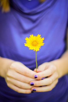 of Yellow Daisy Lavender Blue, Purple Yellow, Lilac, Tertiary Color, Tiger Love, Language Of Flowers, Flower Quotes, Zinnias, Summer Solstice