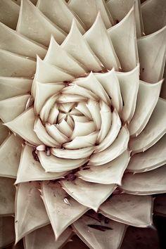 succulente texture
