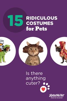 Find the best costume for your pet right meow.