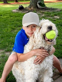 If you are looking for an awesome pet to be your cuddle buddy, a Goldendoodle could be exactly what you are looking for. Click to read the full article at Doodle Boops.