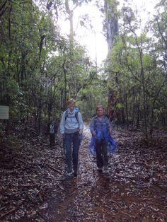 Group Travel for Women. Group Travel, Travel Alone, Western Australia, Walks, Adventure Travel, Track, Join, Tours, Runway