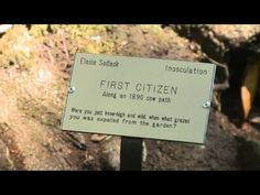 Botanica Recognita: Signage to Facilitate a Greeting by Denise Newman and Hazel White The poets explain their project in this minute video by Jim Mayer. First Citizens, Signage, Cards Against Humanity, Natural, Billboard, Nature, Signs, Au Natural