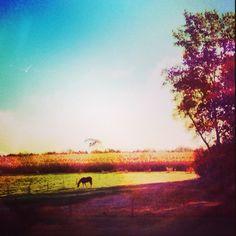 Horse, sunrise, country, rural, pasture, field, farm